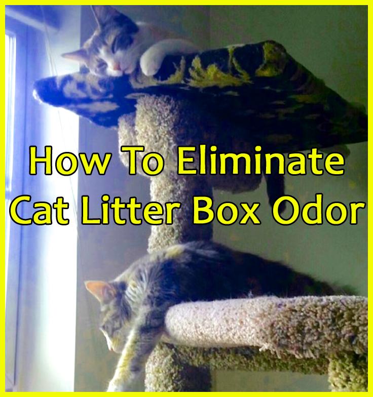 cat-litter-odor-blog