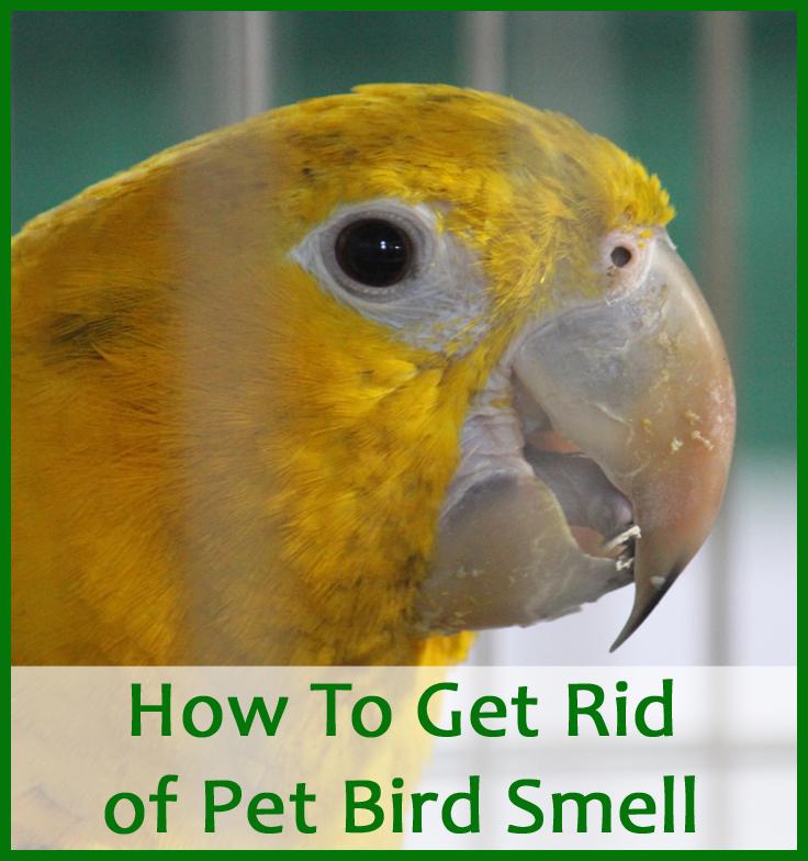 bird-smell-pin